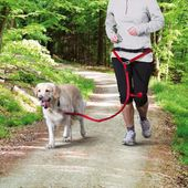 Bauchgurt mit Leine für kleine und mittelgroße Hunde