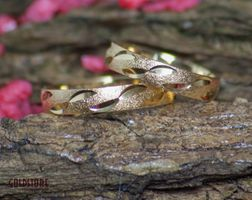 1 Paar Trauringe Eheringe 4 mm Passion 333 Gold Gelbgold inkl. Gravur & Etui