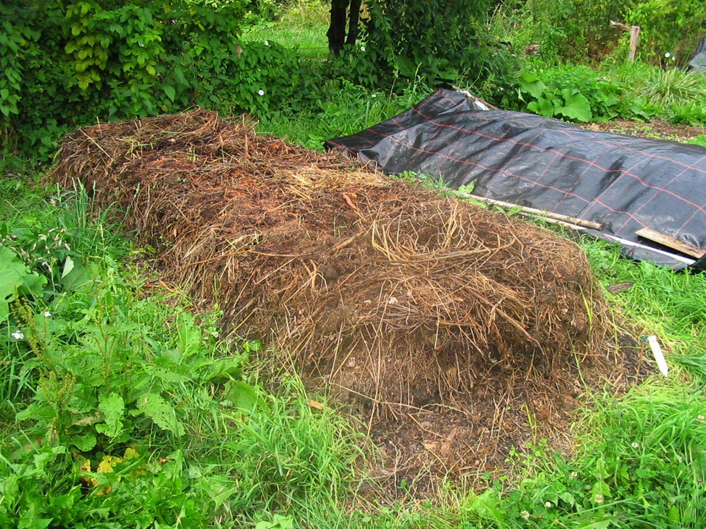 KOMPOSTWÜRMER | natursache.de | Regenwürmer lebend kaufen - effektive Kompostierung von Bioabfall im Schnellkomposter Thermokomposter Wurmkiste Wurmkomposter Komposthaufen – Bild 4