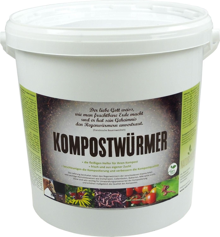 KOMPOSTWÜRMER | natursache.de | Regenwürmer lebend kaufen - effektive Kompostierung von Bioabfall im Schnellkomposter Thermokomposter Wurmkiste Wurmkomposter Komposthaufen – Bild 1