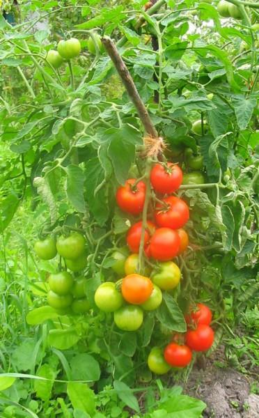 Wurmhumus TERRAGOLD 3l von wurmhandel -  Premiumqualität aus Pferdäpfel - TORFFREI - UNIVERSALDÜNGER für alle Pflanzen - WURMKOMPOST für den Garten und Zuhause - HERGESTELLT IN BRANDENBURG/HAVEL  – Bild 4
