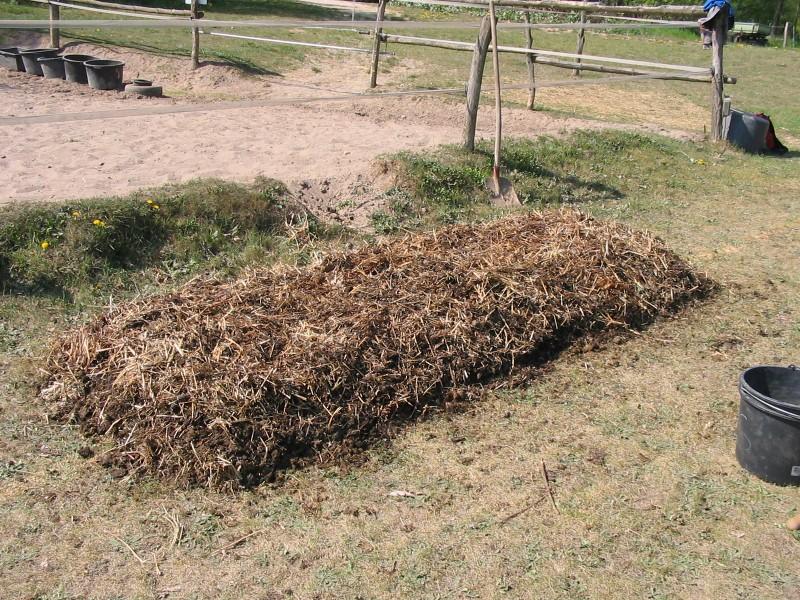 DREAMTEAM Kompostwurmmix - Profi-Set (Eisenia foetida & Eisenia hortensis) - für Komposter, Komposthaufen, Komposttoilette, Wurmkomposter, Wurmkiste - 1500 Stück – Bild 8
