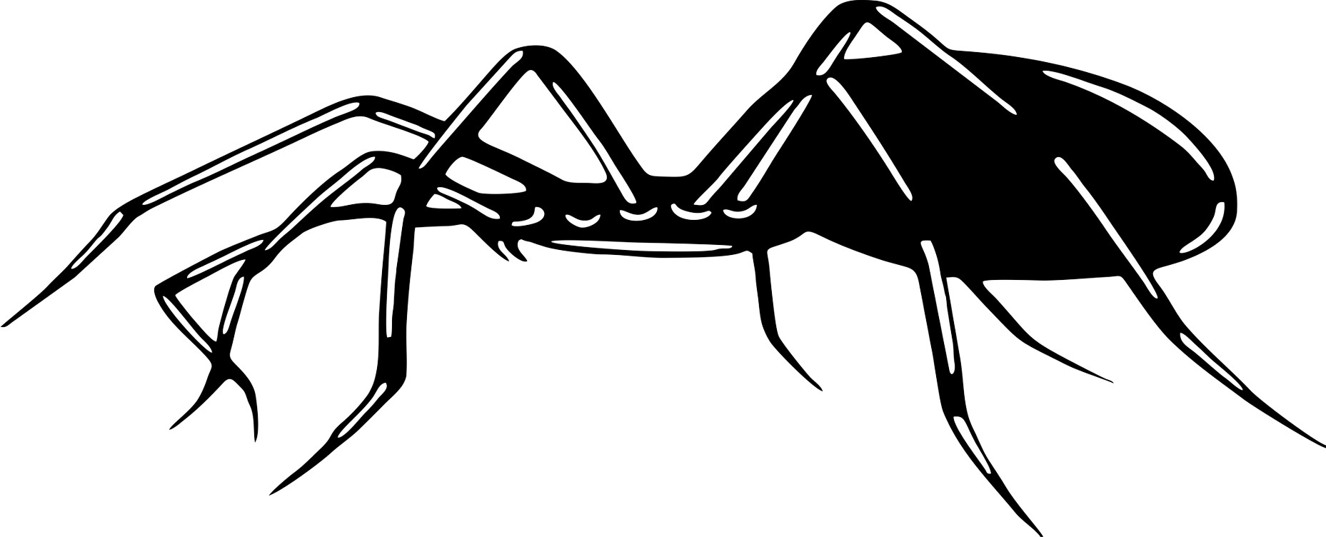 Car-Tattoo Spider 1.160 x 470 mm black – Bild 1