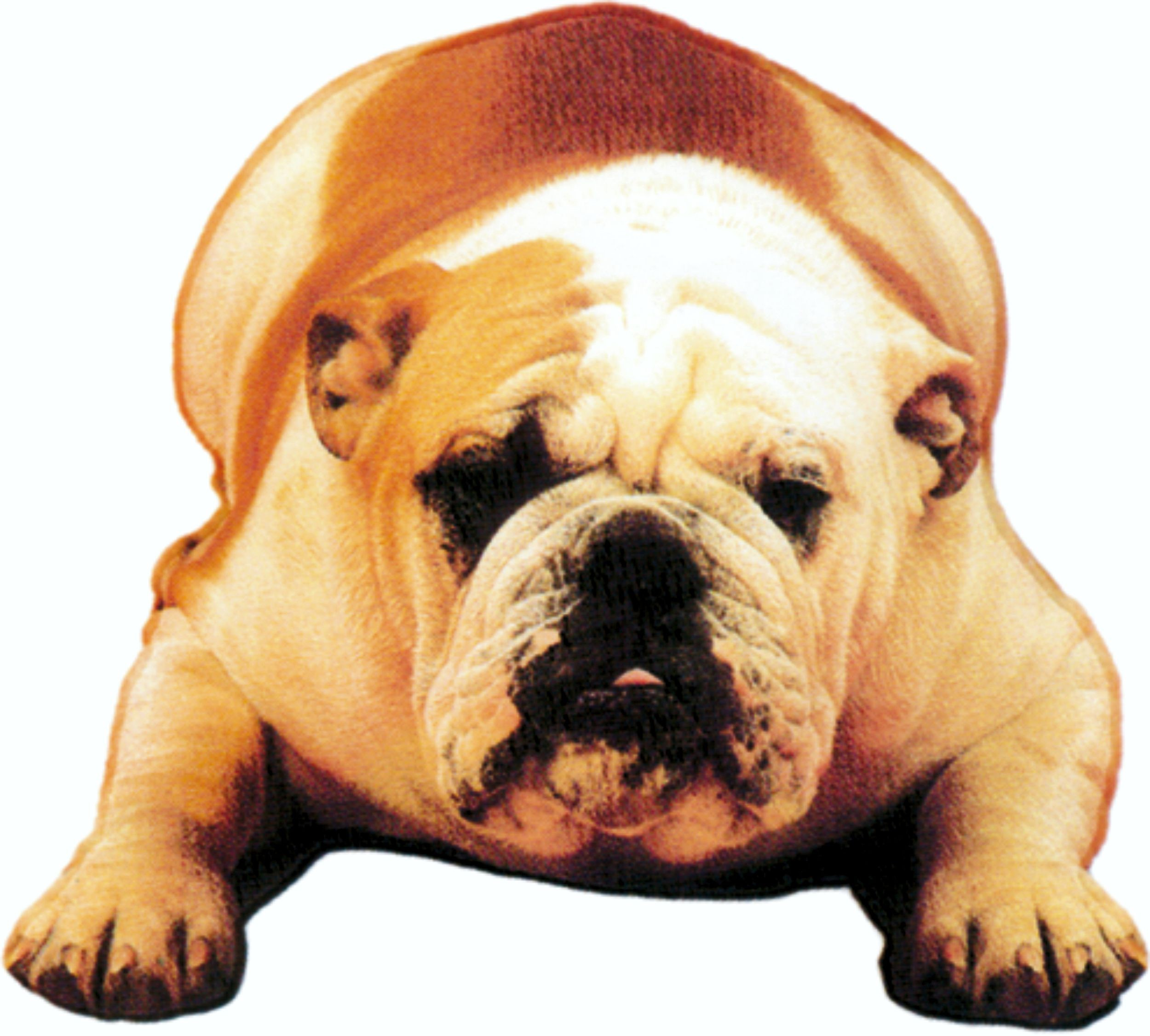 Sticker bulldog 125 x 110 mm – Bild 1