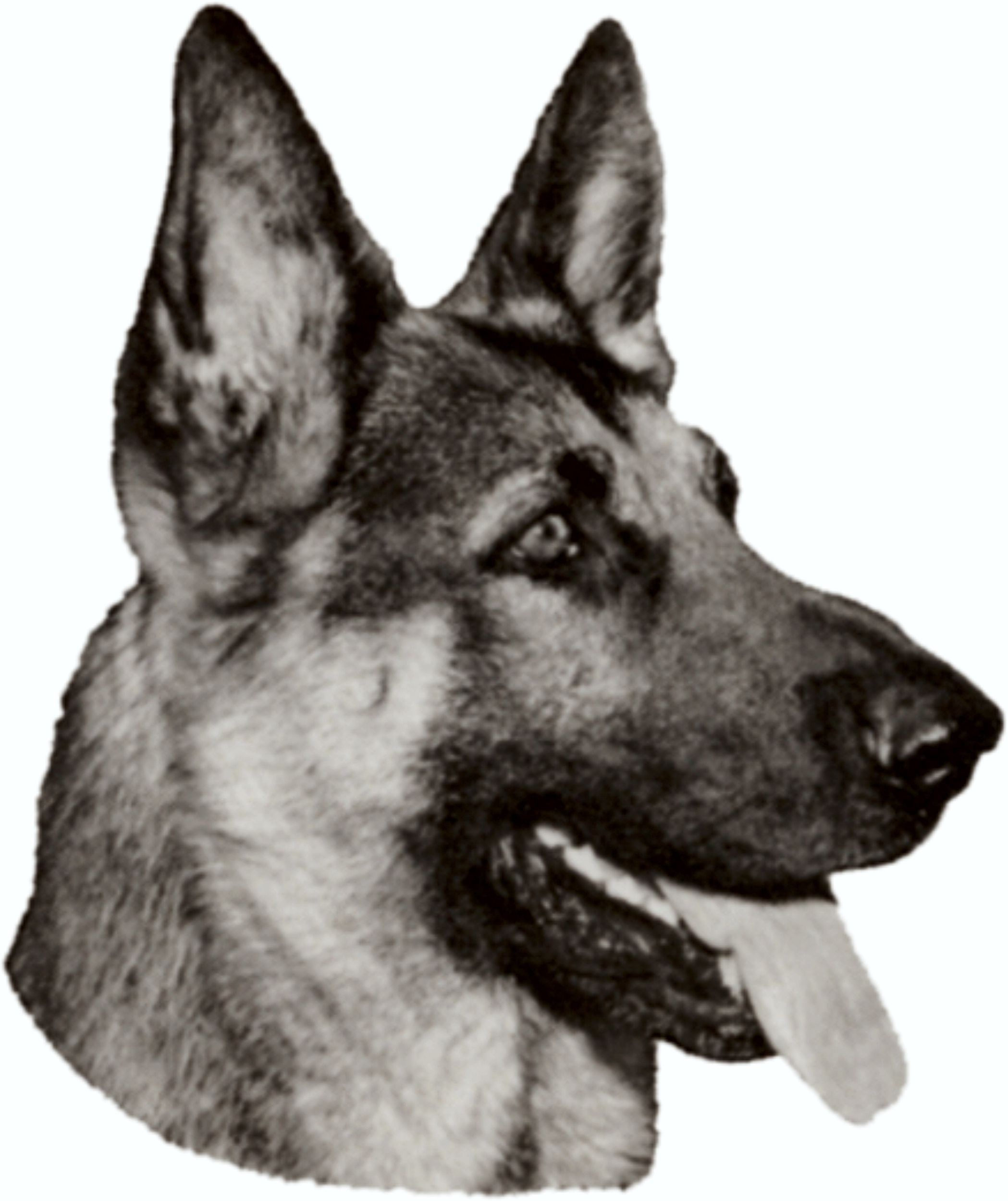 Sticker german shepherd 120 x 100 mm – Bild 1