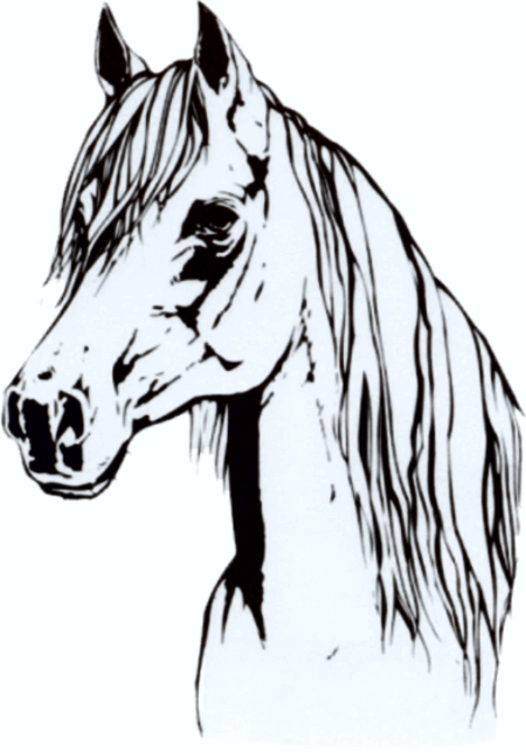 Aufkleber Pferd 120 x 100 mm – Bild 1