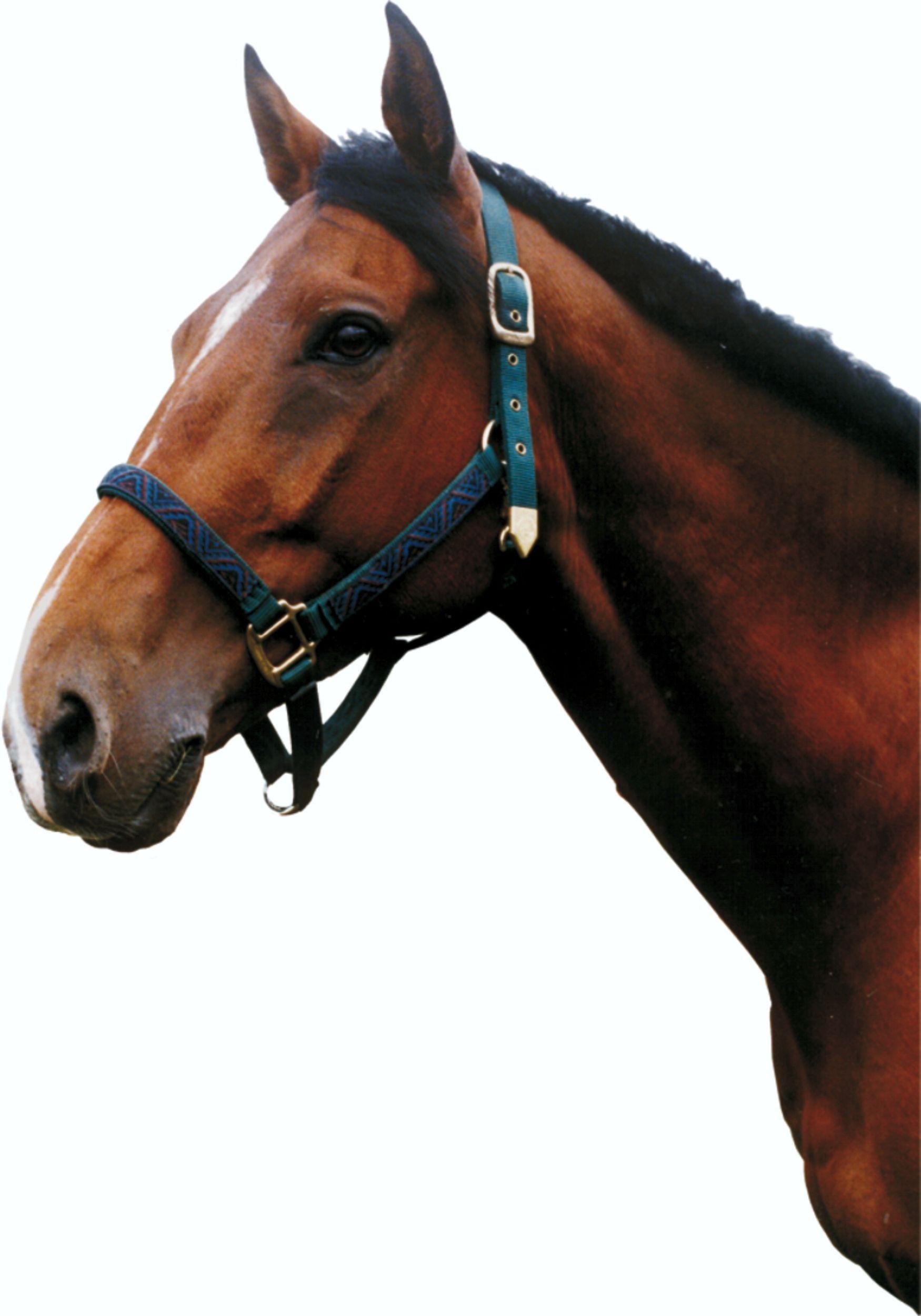 Aufkleber Pferd 210 x 145 mm – Bild 1