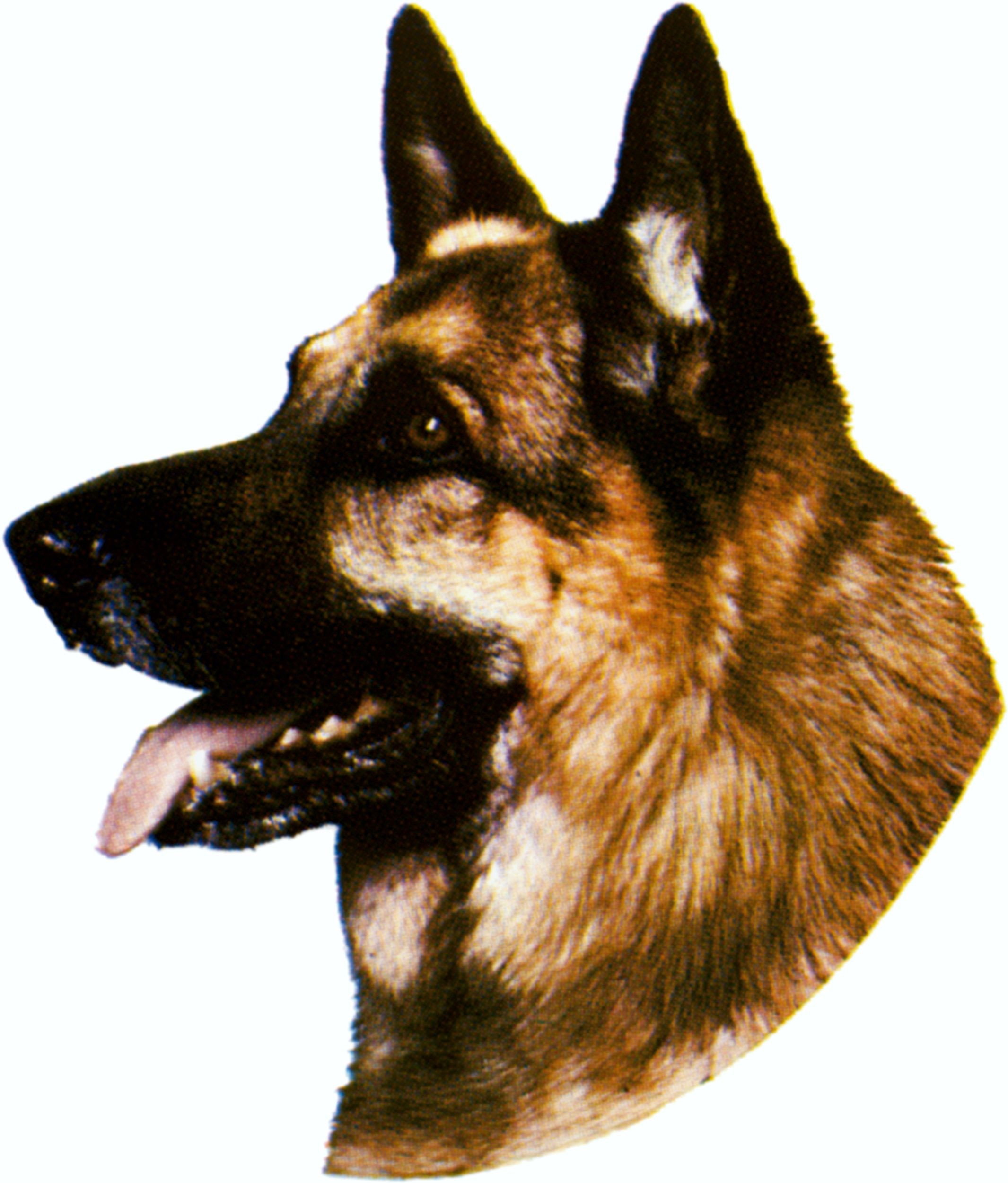Sticker german shepherd 160 x 140 mm – Bild 1