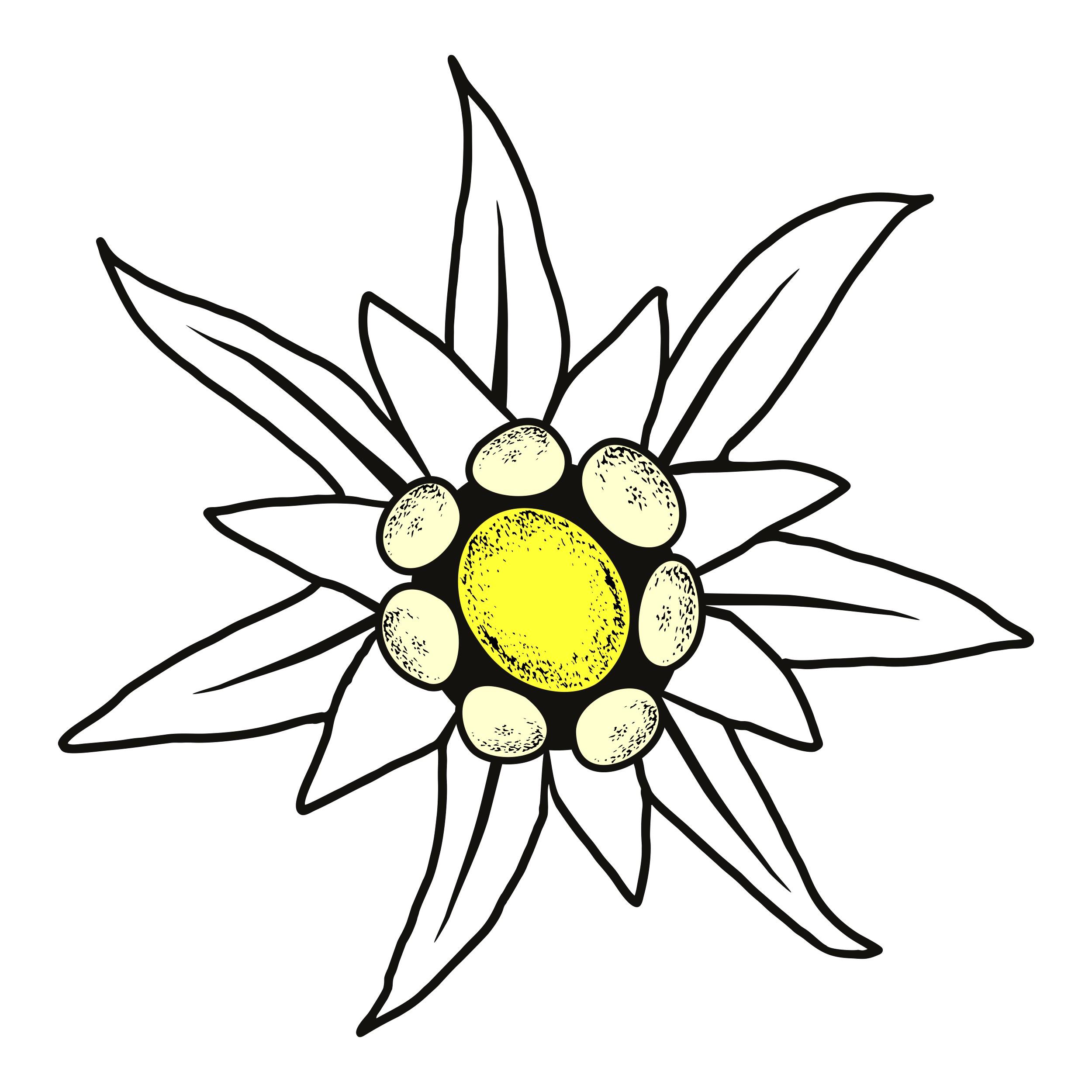 Aufkleber Edelweiss 90 x 90 mm – Bild 1