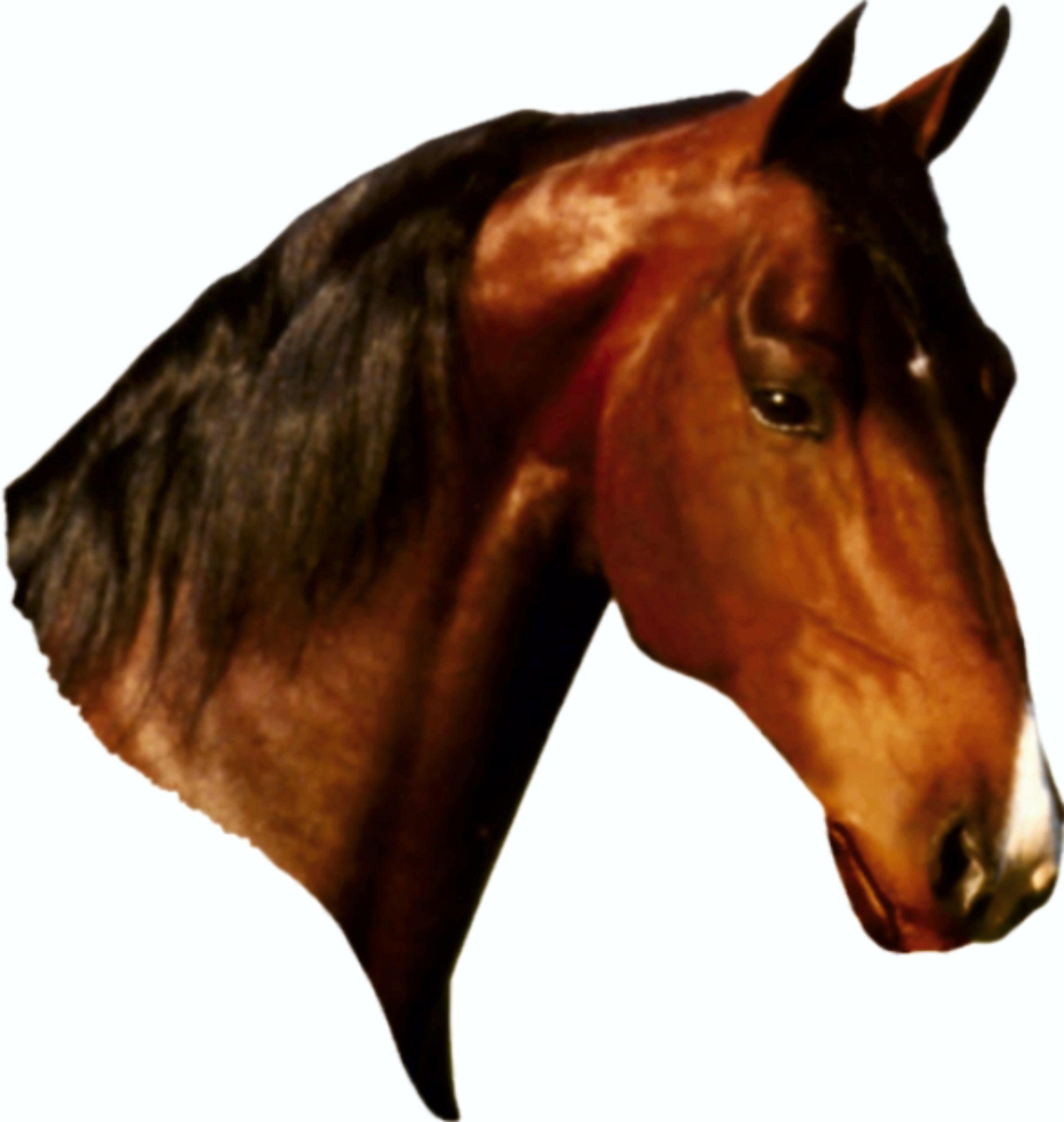 Aufkleber Pferd Dimension 105 x 105 mm 001