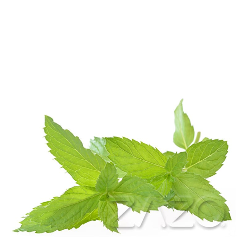 Zazo Peppermint e-Liquid 10 ml – Bild 1