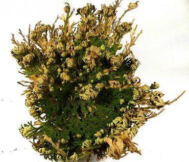 Rose von Jericho Naturideen® 1 Stück – Bild 1