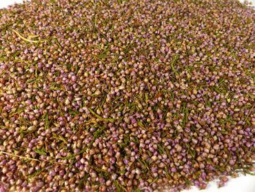 Erikablüten (Heidekrautblüten) Naturideen® 100g – Bild 1