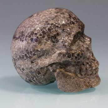 Carved Skull from fossil Coral / Bryozoen – picture 2