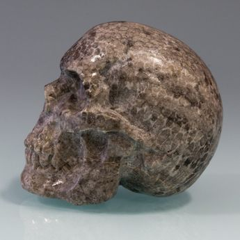 Carved Skull from fossil Coral / Bryozoen – picture 6