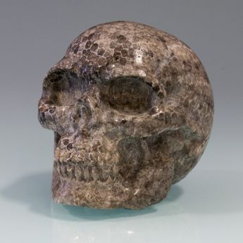Carved Skull from fossil Coral / Bryozoen – picture 1