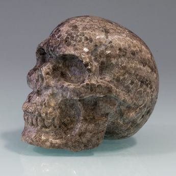 Carved Skull from fossil Coral / Bryozoen – picture 5