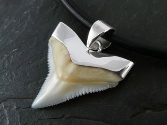 Shark Tooth Pendant 925 Sterling Silver (19-27 mm) – picture 2