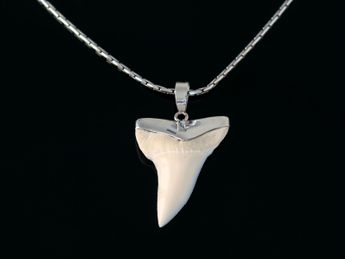 Shark Tooth Pendant 925 Sterling Silver (19-27 mm) – picture 3