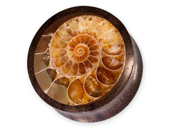 Horn or Wood Flesh Plug with Fossil Ammonite Inlay – picture 1