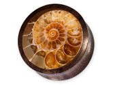 Horn or Wood Flesh Plug with Fossil Ammonite Inlay