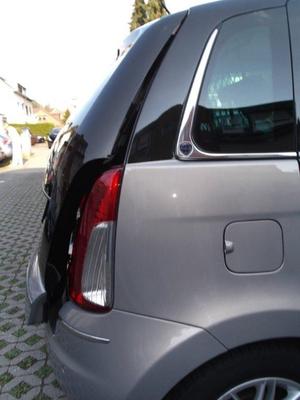 Lufty® - Lancia Musa – Bild 2