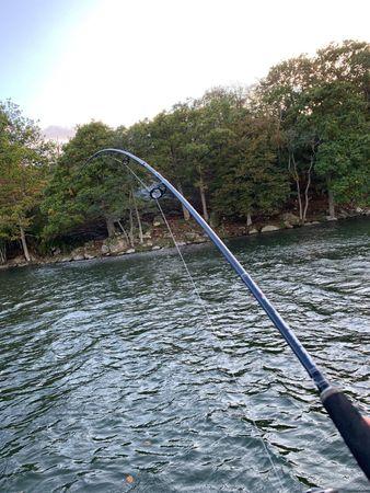 Bullseye Beast Boat Spinnrute 2,40m 45-90g  – Bild 2
