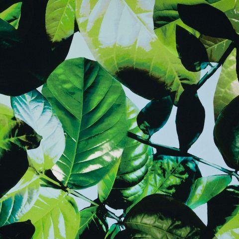 Viskose Seide Jersey mit Blätterdruck in grün