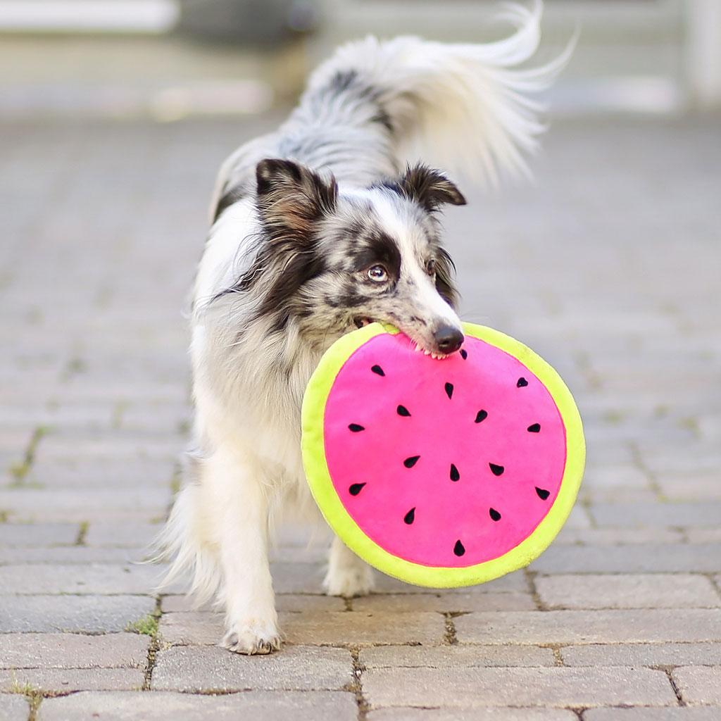 Hundespielzeug nähen: Frisbee DIY + Freebook