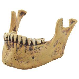 Menschlicher Unterkiefer für Totenkopf IGF766-014