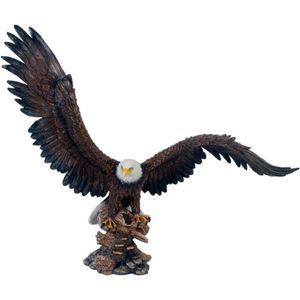 Bunter Adler setzt zum Flug an 50cm