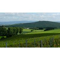 Weingut Roland Mees Nahe Kreuznacher Rosenberg Scheurebe Qualitätswein 2016 halbtrocken (12 x 0,75l)   – Bild 3