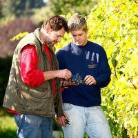 Rotwein Weingut Bayer Erbhof 2014 trocken (3 x 1,0l) - VERSANDKOSTENFREI - – Bild 2