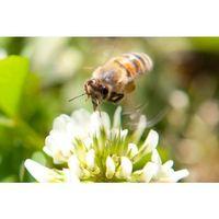 "Weißwein Weingut  Römerkelter ""Bee""Kräuterwingert Riesling trocken (6 x 0,75 L)   – Bild 3"