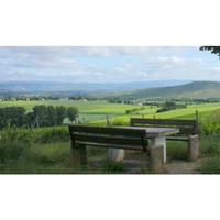 Weingut Roland Mees Nahe Riesling halbtrocken Kreuznacher Paradies 2015  (12x0,75l) - VERSANDKOSTENFREI - – Bild 4