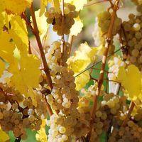 Schroppino Rosé | Cuvée, lieblich (9 x 0,75l)   – Bild 4