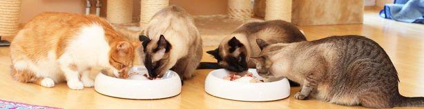 4 Katzen fressen Katzenfutter maus aus 2 grossen Lucky-Kitty Katzennaepfen aus Keramik