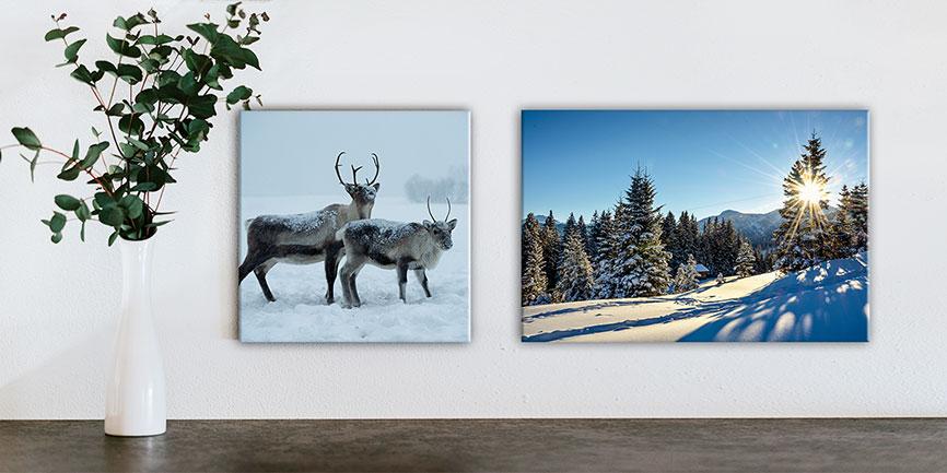 Artgalerie Bildershop Winter Bilder Schnee Landschaft Tiere Fotografie