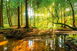 Wald Motive von Artland im Onlineshop ARTgalerie Bildershop