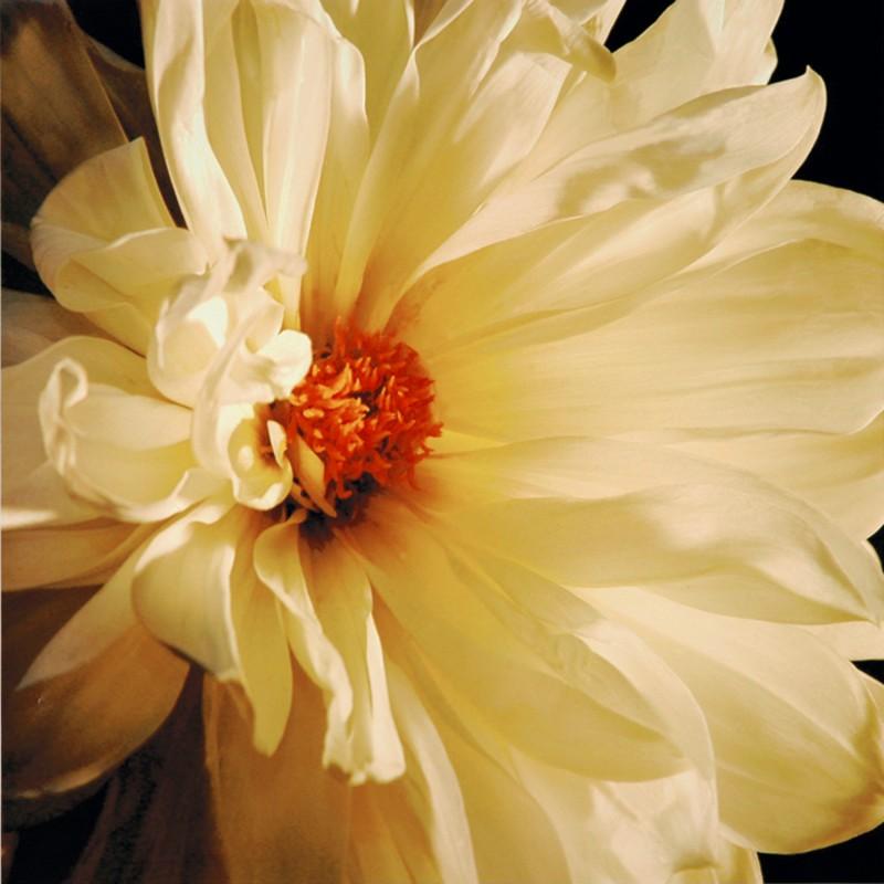 Helvio Faria: Golden Centre - Kunstdruck auf Holzfaserplatte 59 x 59 cm