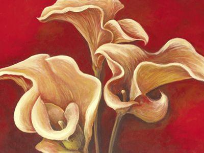 A. S.: Callas auf Rot - Original auf Leinwand 70 x 90 cm