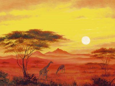 A. Heins: Giraffen in der Dämmerung - Kunstdruck auf Holzfaserplatte 57 x 79 cm