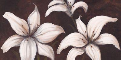 A. S.: Lilies on brown I - Original auf Leinwand 50 x 100 cm