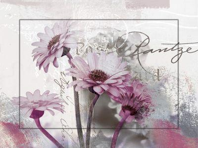 D. S.: Fotocollage -  Gerberas, lila - Bild mit Modellrahmen 59,9 x 80,9 cm