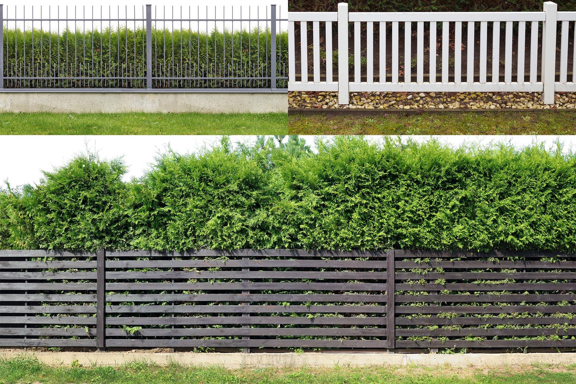 Hecken Mauern Zaune Attraktive Grenzen Fur Den Garten