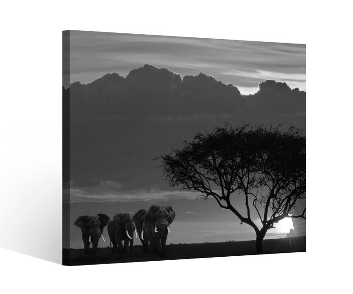 leinwandbild 1tlg afrika savanne elefanten safari baum. Black Bedroom Furniture Sets. Home Design Ideas