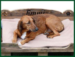 Einführungspreis: My Country Dog Paletten Hundebett UNIKAT Hunde -M – Bild 2