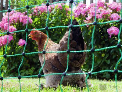 Hühnerzaun Geflügelzaun Geflügelnetz 112cm x 25m nicht elektrifizierbar mit Einzelspitze – Bild 2