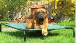 XXL Hundebett Hundeliege grosse Hunde 110x80x20cm 2 Farben 001