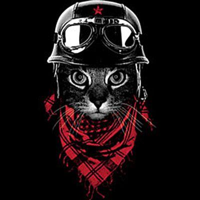 Kinder-Shirt für Jungen - Abenteurer Katze - T-Shirt mit leuchtendem Neon-Motiv Bild 3
